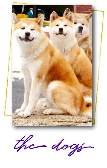 Hachi: The Animal Stars