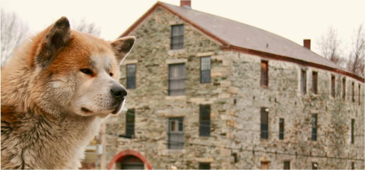 Forrest Animal Star from Hachi: A Dog's Tale